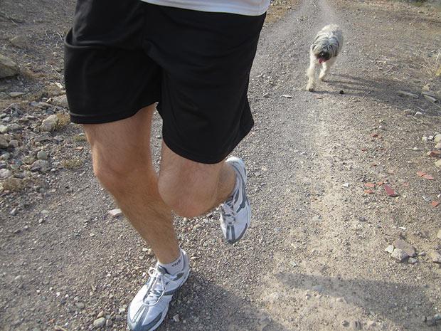 running con perros