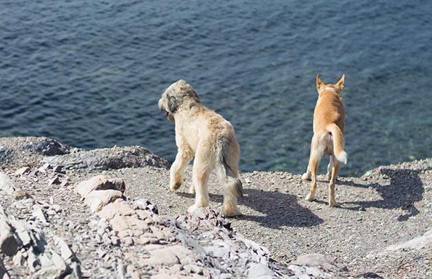 trail running perros